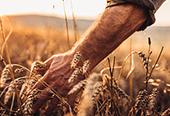 Grain to Glass Microsite
